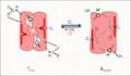 Kooperativitaet Biochem (Schema).png