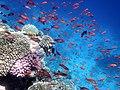 Korallenriff im Roten Meer..DSCF4637BE.jpg