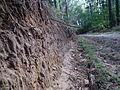 Kowanowko forests, gm. Oborniki (34).JPG