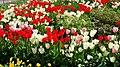 Kukkiahelsinkikesäsuomi72319832784751257577522.jpg