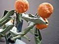 Kumquat (3312496125).jpg