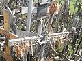La Colline des croix, en Lituanie 02.jpg