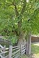 Lajen Walnussbaum im Bäcknangerle Tafel.jpg