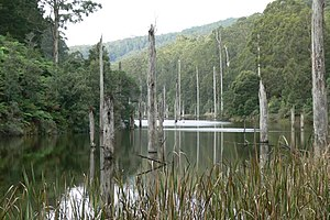 Great Otway National Park - Lake Elizabeth, formed from a landslide in August 1953, it broke its banks allowing the West Barwon River to flow.