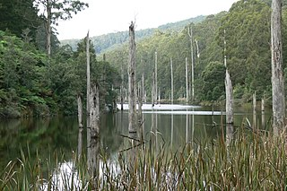 Great Otway National Park Protected area in Victoria, Australia