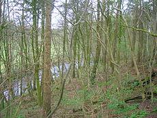 Lambroughton Woods