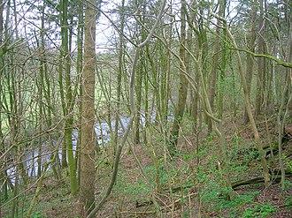 Chapeltoun - The Bonnie wood o' Lambroughton.