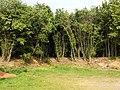 Landschaftsschutzgebiet Wäldchen bei Buer Melle Datei 29.jpg