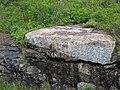 Large anorthosite xenolith in ophitic ilmenite gabbro (anorthosite series, Duluth Complex, Mesoproterozoic, 1099 Ma; Keene Creek East Skyline Parkway roadcut, Duluth, Minnesota, USA) 2 (22238237431).jpg