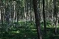 Lasy Łączańskie - panoramio (29).jpg