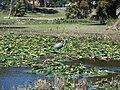 Leesburg FL Venetian Gardens birds06a.jpg
