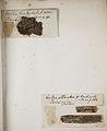Lichenes Helvetici pars altera 002.jpg