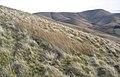 Lightning Hill - geograph.org.uk - 303486.jpg
