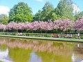 Lilienthal-Park - Fruehling (Springtime in Lilienthal Park) - geo.hlipp.de - 36279.jpg