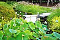 Lilies grouped together in Japanese Garden - panoramio.jpg