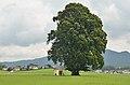 Linden in Kirchfenning, Hiasnbauerkapelle, Henndorf 02.jpg