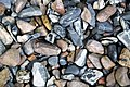 Lithic pebbles (Lake Champlain shoreline, near Lone Rock Point, Vermont, USA) 3.jpg