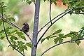 Little Bird (233655627).jpg