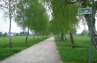 Trail of Remembrance and Comradeship - An avenue of birches along the trail in the Rudnik District