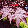 Local Garden Beauty (48134929553).jpg