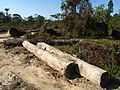 Logging Forest Loss IMG 3939 03.jpg