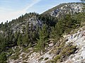 Looking south on Tahoe Rim Trail (2979563969).jpg