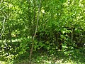 MD.RS - rezervația naturală silvică Stînca - apr 2018 - 09.jpg