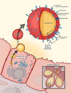 Milk fat globule membrane