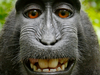 Macaca cropped.png