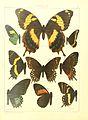Macrolepidoptera15seit 0033.jpg