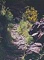 Madeira-12-Treppenweg-2000-gje.jpg