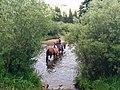Madison County, MT, USA - panoramio (21).jpg
