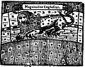 Magnitudine Cognositur.JPG
