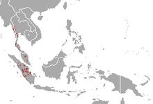 Malayan Tapir Wikipedia