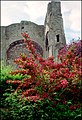 Malmesbury Abbey - geograph.org.uk - 2200338.jpg