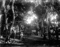 Mangoträden utanför vår bostad. Walter med en halvapa. Fenerive Est, Fenoarivo Atsinanana - SMVK - 021717.tif