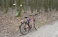 Marcelinski forest Poznan bike.JPG