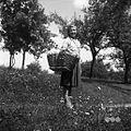 Marija Jaklič s koškom. Pri ta Zadnjih, Podkraj 1960.jpg