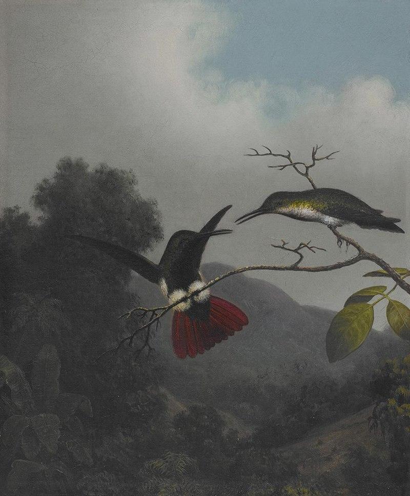 Мартин Джонсон Хид - Манго с черным горлом - 2006.83 - Музей Хрустальных мостов Америки Art.jpg