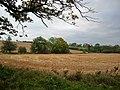 Meadowland - geograph.org.uk - 595540.jpg