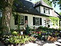 Meine Blumen und Pflanzenvielfalt - panoramio.jpg