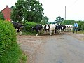 Milking time at Barnes Hill Farm - geograph.org.uk - 198816.jpg