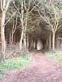 Morchard Wood - geograph.org.uk - 88569.jpg