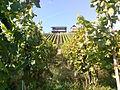 Mosel vineyard.jpg