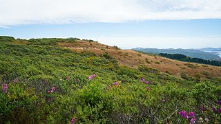 Mount Tamalpais State Park Forested land preserve in Marin County, California