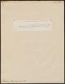 Muraena flavomarginata - 1798-1876 - Print - Iconographia Zoologica - Special Collections University of Amsterdam - UBA01 IZ15300127.tif