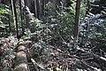 NPR Boubínský prales 20120910 16.jpg