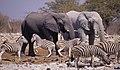 Namibia. mazzaliarmadi.it wildlife (2802882000).jpg