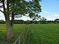 Narrow footpath through the horses' fields - geograph.org.uk - 1881083.jpg