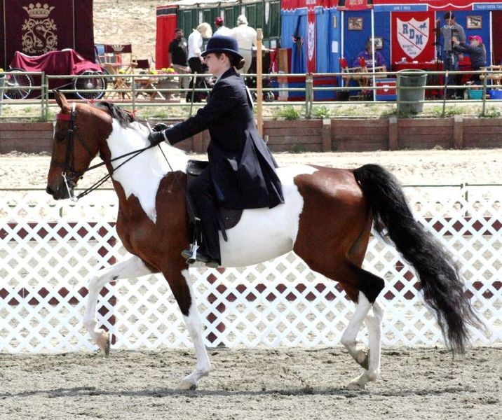 File:National Show Horse.jpg